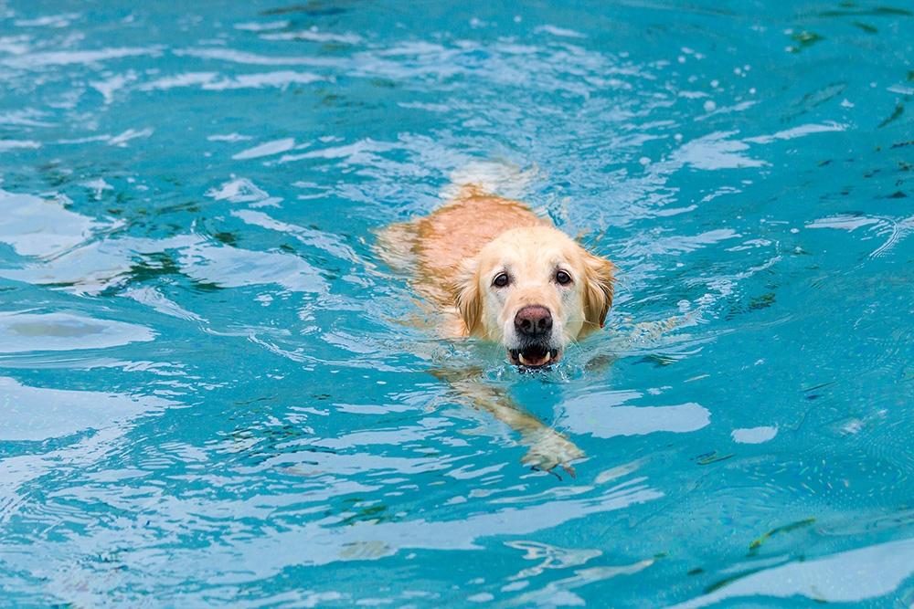 Freibad Mit Hund