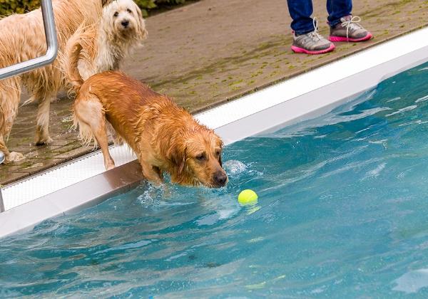 Freibad Für Hunde